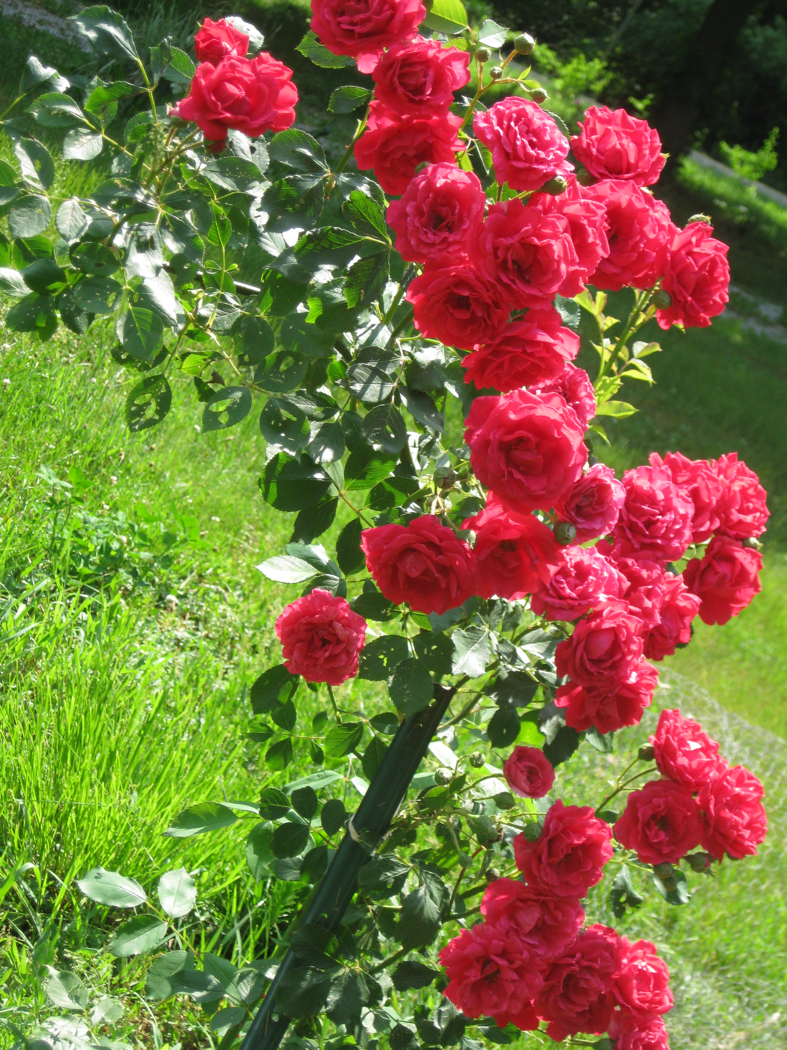 Bushes Plants Landscaping
