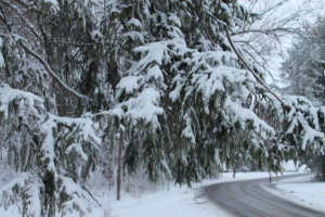 wintermarch25 010