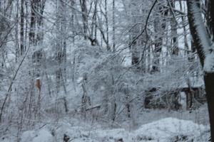 wintermarch25 012