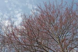 springdayapril2013 004