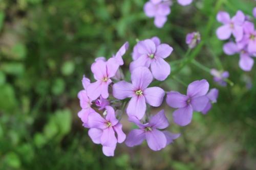 myyardrosestreesflowersetcmay 061