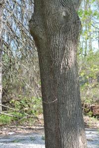 treesinbloommayonesunnyday 025