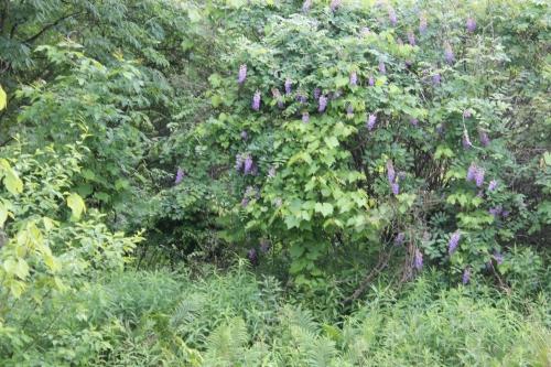 naturealumandothersjune 022