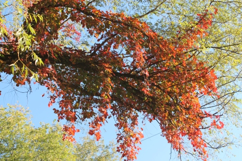 autumnsignssept242013 002