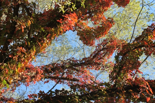 autumnsignssept242013 003