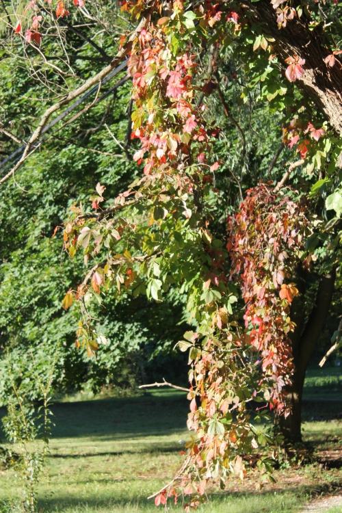 autumnsignssept242013 009