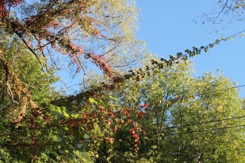 autumnsignssept242013 016