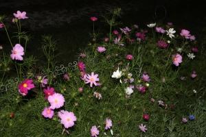 nightshotsofplantssept 032