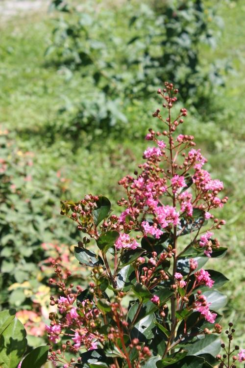 gardenatpeakaug2014 001