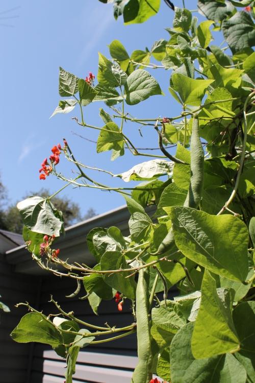 gardenatpeakaug2014 010
