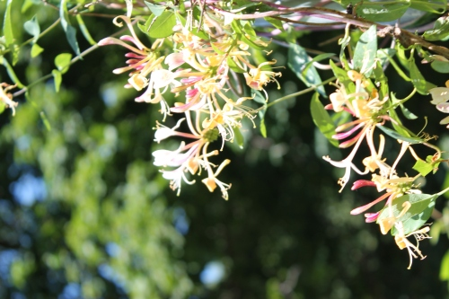 gardenatpeakaug2014 042