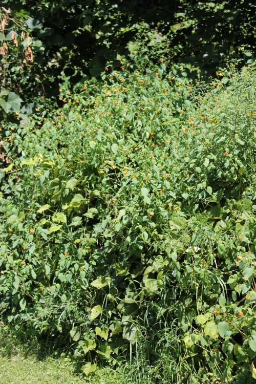 gardenatpeakaug2014 073
