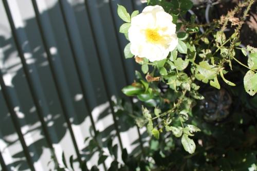gardenatpeakaug2014 110
