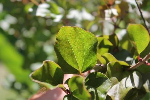 septflowersplants2014 037
