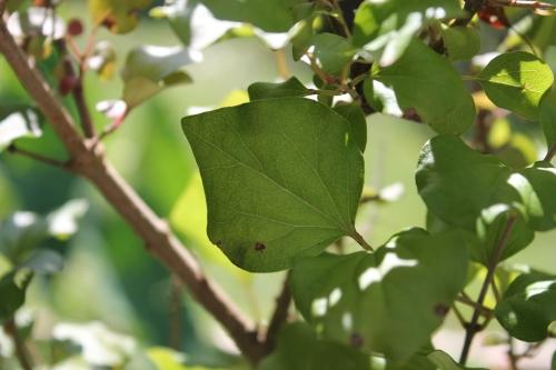 septflowersplants2014 040